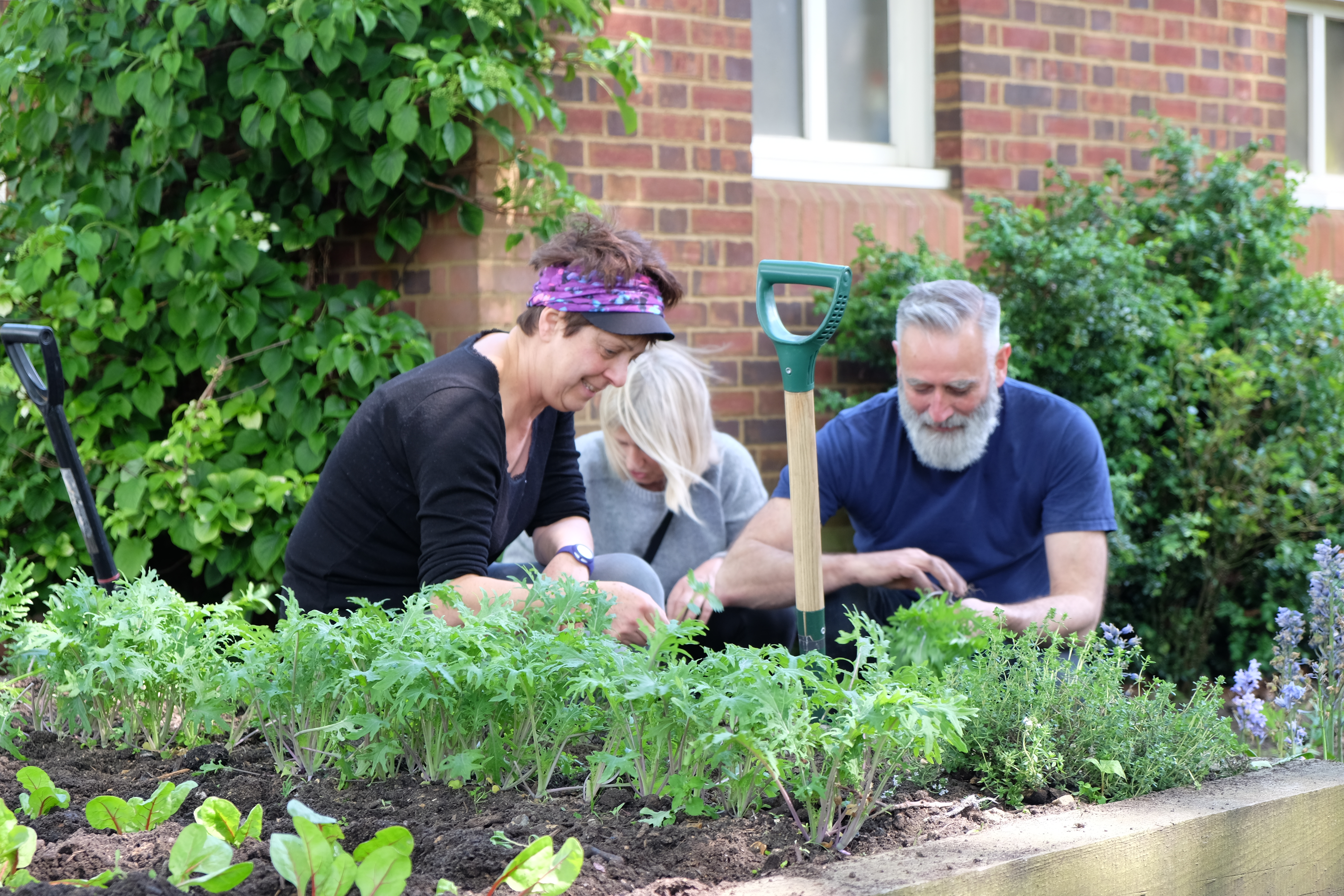 Amanda, Dee and David sorting the kale (3)
