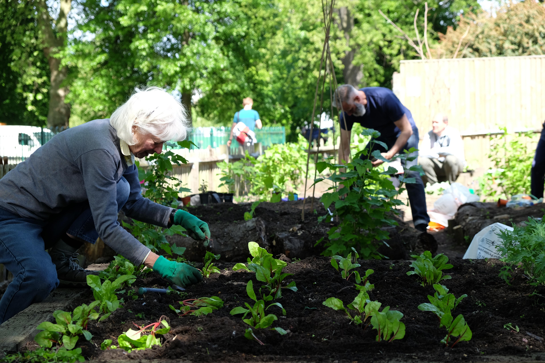 Heather planting chard