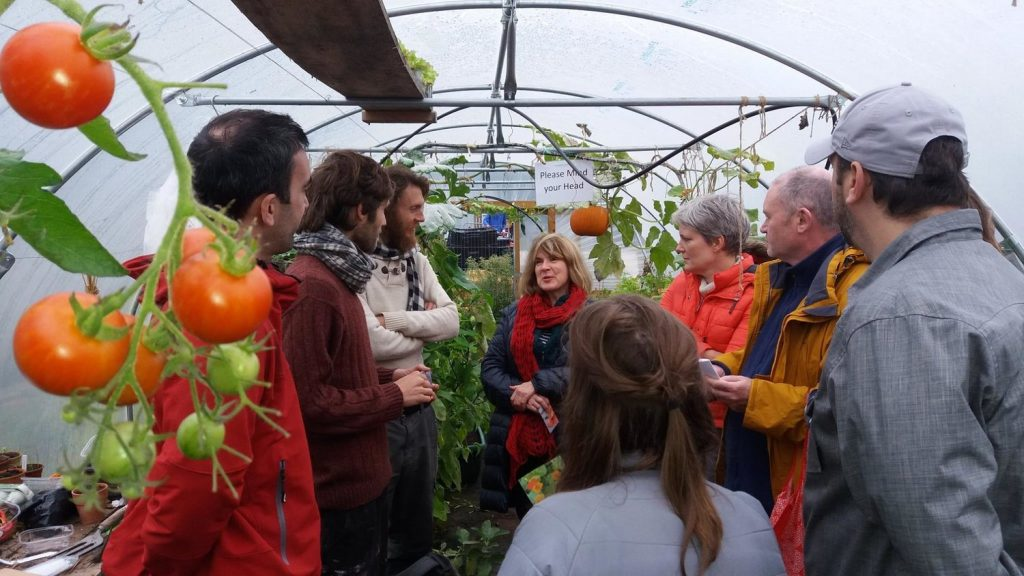 group-in-the-polytunnel