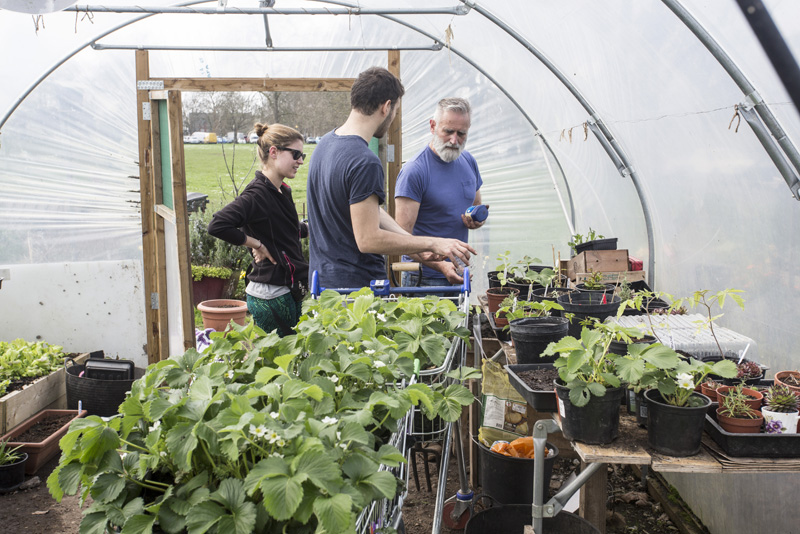 Growing plants in the polytunnel